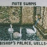 Bishop's Palace, Wells: Mute Swans